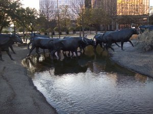 Texas Longhorns in downtown Dallas, Texas